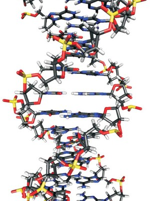 B-DNA double helix